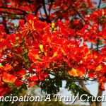 Emancipation Day: A Truly Crucian Story