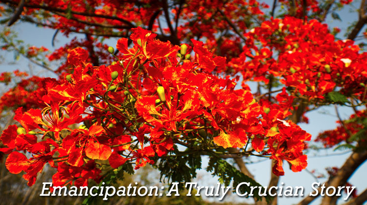 Emancipation A Crucian History