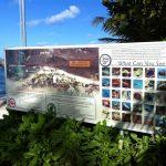 Palms Pelican Cove | Blue Flag Beach