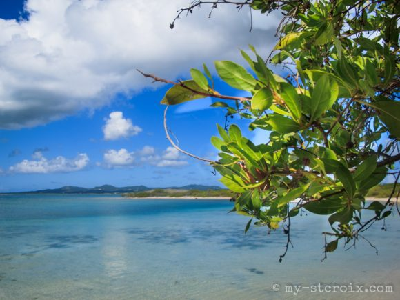 Shell Island St Croix