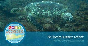 Sea Turtle Nesting Season on St Croix