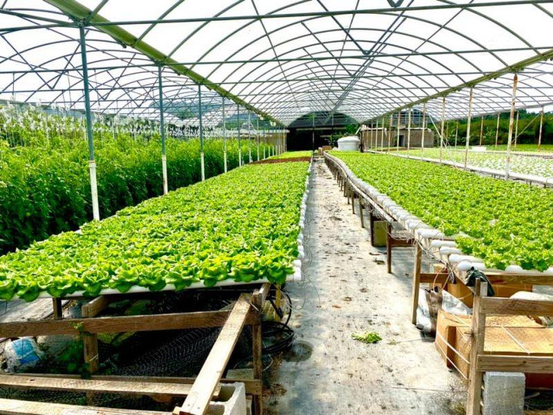 Tropics Hydroponics Farm